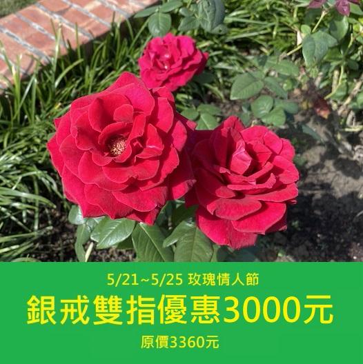 五月玫瑰情人節優惠活動